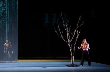 ©Laurent Paillier The Tree